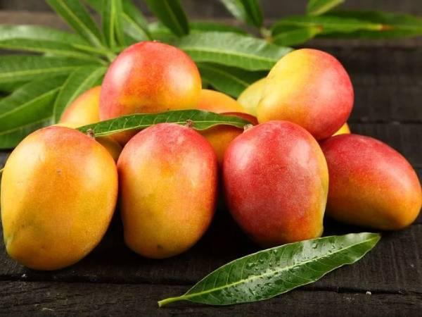 Choosy Lip Pack Mango