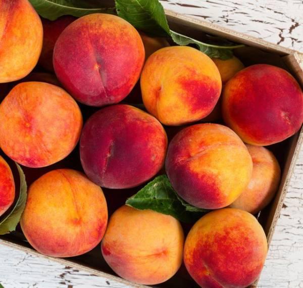 Choosy Lip Pack Peach